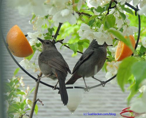 BlogCatbirds_edited-1