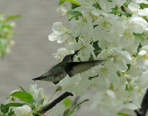 BlogHummingbird