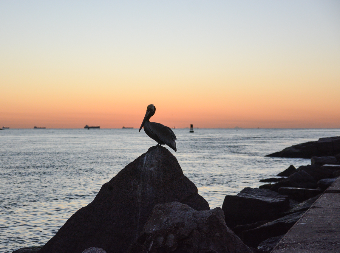 Sunrise 2-10 pelican